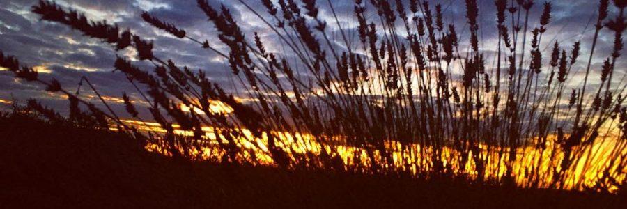 #sunset #rural #France #lavender #clouds #bigsky #endoftheday #beautiful #aurevoir #happytimes #family #friendship #silhouette