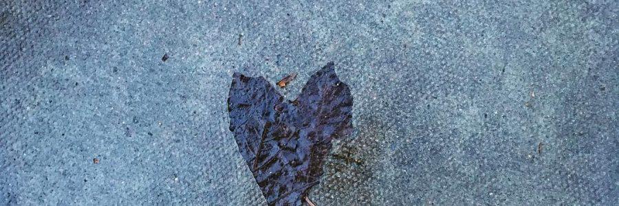 #leaf #heart #pavement #street #love #nature #naturalart #winter #london #londonlife #accidentofnature #beautiful #fate #meanttobe