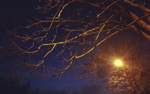 #streetlight at #dusk #trees #winter #blue #london #night #nightphotography #streetphotography